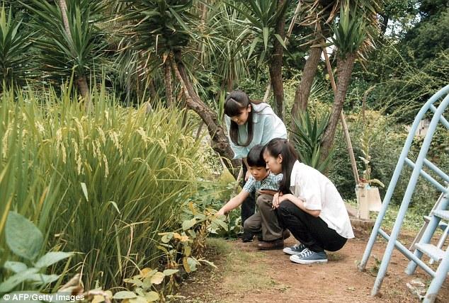 Hoàng tử Hisahito thường làm vườn cùng với hai chị gái của mình.