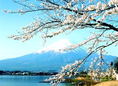 Núi Phú Sỹ Nhật Bản – Mùa Hoa Anh Đào